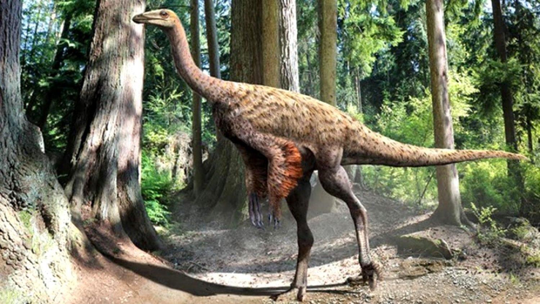 ornithomimus 1500